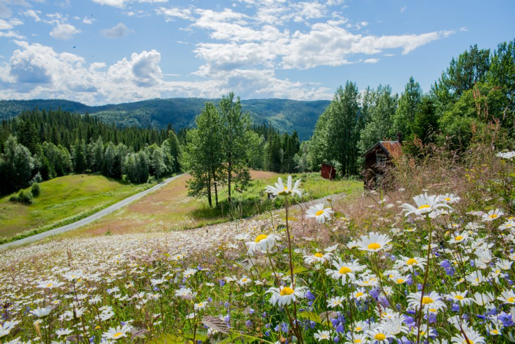 Flower Meadow overlooking the lower part of the farm and the mountains on the horizon