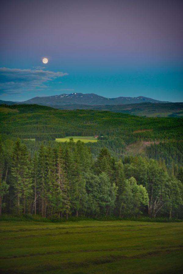 Utsikten fra Beitlandet med slått eng, skog og fjell